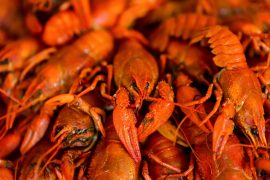 shoal creek crawfish boils